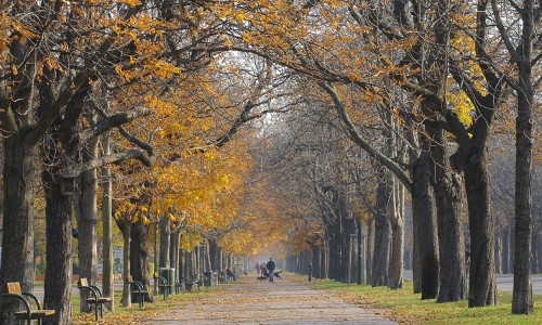 Autumn Walk in the Prater