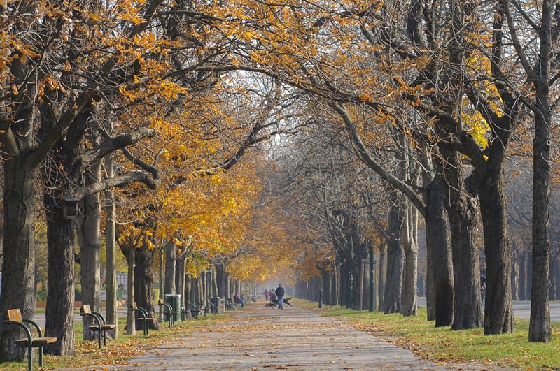 Autumn Walk in the Prater