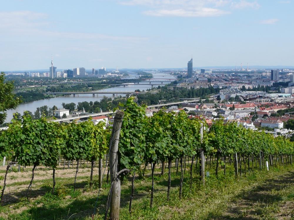 Viennese Wine