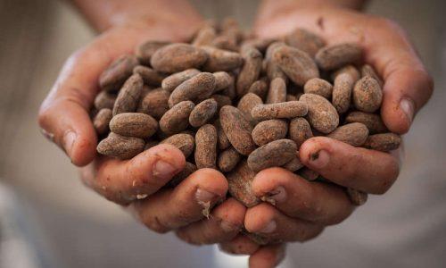 Kakaobohnen(c)Fairtrade Intl.Hawkey