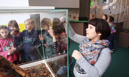 Ants terrarium, ZOOM Children's museum. copyright J.J. Kucek