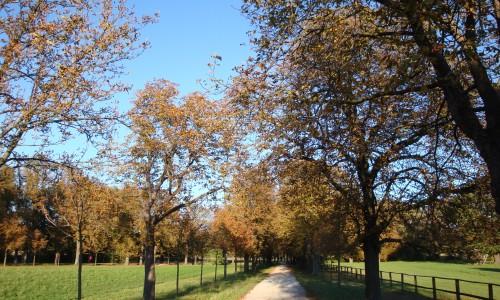 Der Lainzer Tiergarten im Herbst