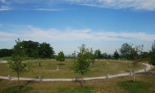 Lebensbaumkreis Am Himmel