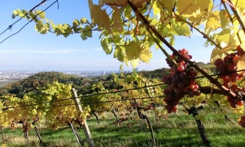 Wiener Weinwandertag