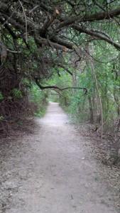 Waldweg Tierpark