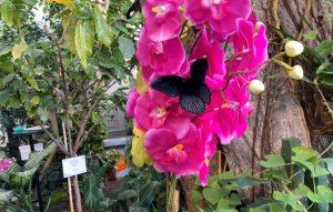 Schmetterlinghaus Blume