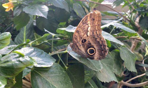 Schmetterling im Schmetterlinghaus